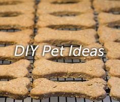 DIY Pet Ideas