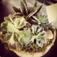 Another beautiful succulent garden we delivered on a sunny day in March.