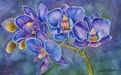 Blue Orchids | Phalaenopsis, Blue Orchid - A Rare Beauty
