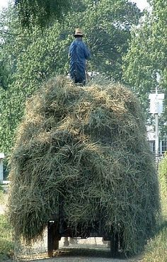 Hauling Hay To The Barn