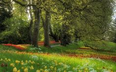 Spring Grass Alley, Tulips, Flowers, Trees, Meadow, Nature