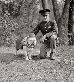 "Vintage photo of U.S. Marine Corps mascot & officer || Old English Bulldog | ""Chesty"""