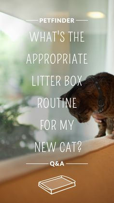 Are you a first-time cat parent? You probably have plenty of questions about litter box training. Petfinder.com has a comprehensive guide to all things pet potty training. Click through to learn more.
