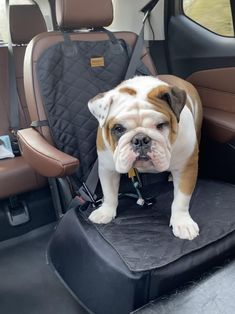 Bulldog Breeds, R Dogs, English Bulldogs, Bullies, This Or That Questions, Love, Car, Amor, Automobile