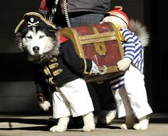 The Perfect Dog Costume