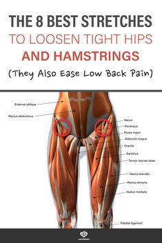 3d rendering of Front Leg Muscles with text - the 8 best stretches to loosen tight hips and hamstrings (they also ease low back pain) Hip Strengthening Exercises, Hip Flexor Exercises, Back Pain Exercises, Stretches For Hip Flexors, Hip Stretching Exercises, Roller Stretches, Flexibility Workout, Stretches For Flexibility, Best Stretches