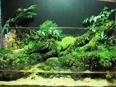Moss paludarium