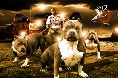 28 Best BREEDING BANNERS images in 2014 | Banner, Banners, Facebook
