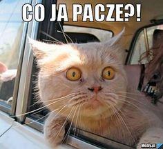 Rozmowa z dr Magdaleną Kamińską o tym, co Andrzej Duda ma wspólnego z kotem, a memy z Homerem.