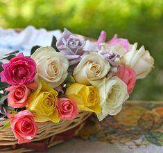 розы в карзине