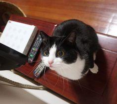 很脆的海蜇头的相册-黑猫警长和白猫警探