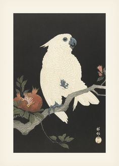 Japanese Woodcut, Japanese Poster, Typography Poster, Graphic Design Typography, Vintage Japanese, Japanese Art, Vintage Art, Vintage Posters, Parrot Drawing