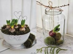 hyacinten in glazen pot