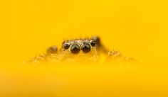 Matt Cole Macro Photography: Insect Macro Photography Hints and Tips