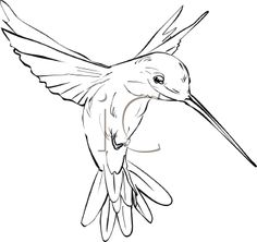 hummingbird art | Royalty Free Hummingbird Clipart