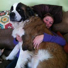 Et le chien qui sait qui est la VRAIE vedette de cette photo. | 21 chiens qui ont vraiment sous-estimé leur taille