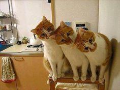 Synchronized peeking.