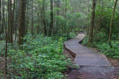 15 great hikes in North Carolina - shown: Pink Beds Loop, Pisgah National Forest