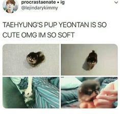 Yeontan is so cute just like his owner taetae