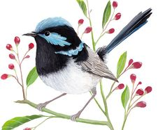 A beautiful blue wren to brighten your home! This printable water-colour & gouache painting would make the perfect gift for any bird lovers in your life! Beautiful, Inspiring Wall Art for your Home. –<>–WHAT YOU GET–<>– •••••••••••••••••••••••••••••••••••• - TWO print sizes included to
