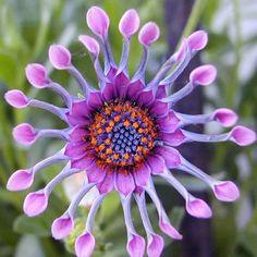 The Most Beautiful Rare Flowers World Scienceray - InspiriToo.com