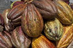 Reemplazar bosque tropical por aceite de palma, cacao o caucho aumenta las emisiones de CO2 | 20minutos.es