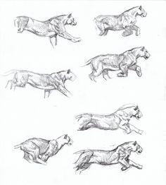 Smilodon hunting sequence sketch 1, Artist Sketchbooks , Study Resources for Art Students  CAPI ::: Create Art Portfolio Ideas at milliande.com, Art School Portfolio, Sketchbook, How to Draw Animals, Sketching, Animals, Cat, Animal Anatomy