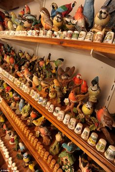 Home tweet home: Mr Cobbold spends hours every week tending to his bird-related collection