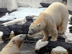 See magnificent polar bears at the Wild Arctic exhibit at SeaWorld Orlando.