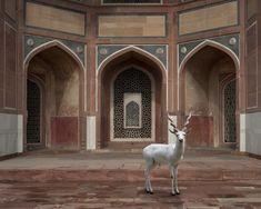 The Witness, Humayun's Tomb, Delhi