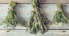 20 erbe curano corpo mente