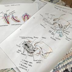 My anatomy and physiology work routine — Vet to be Animal Medicine, Medicine Book, Veterinarian Career, Vet Jobs, Medicine Student, Vet Med, Veterinary Medicine, Frases, Animales