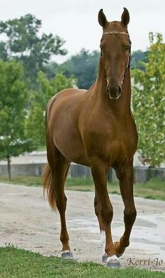 Nice horse, but would be gorgeous with its mane...