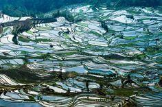 00E4B63E006F64B45BAFE49AE53847200F48894458DA9 1280 850 Terraced Rice Field Photo Rice terrace fields in Yunnan Terraced fields