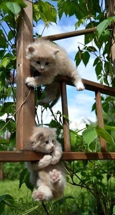 "(Top one) ""Dude? Could you fricken help me? (Bottom one) ""NO! You know I'm stuck too?""코리아카지노♥PiNK14.COM♥다모아카지노♥PiNK14.COM♥강원랜드카지노"