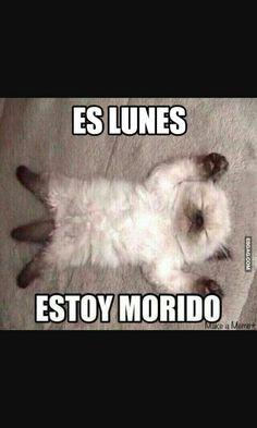 Estoy morido por que no era viernes!!!☺