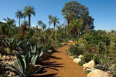 Você sabia que no Inhotim também crescem cactos típicos de regiões desérticas? Para isso, o solo é drenado e preparado com areia e brita. Visite o Jardim de Pedras para conhecer as espécies.
