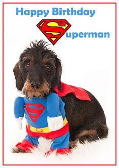 Grappige verjaardagskaart van een Teckel in Superman pak (@Karen van Gerner Fotografie)