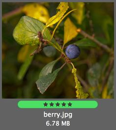 Photo with 5 stars assigned and a green label in Adobe Bridge