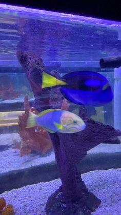Saltwater Tank, Saltwater Aquarium, Aquarium Fish, Tetra Fish, Cool Fish Tanks, Underwater Pictures, Koi Fish Pond, Water Animals, Marine Fish