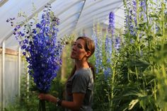 Delphinium--perennial that pairs well with irises. Gorgeous, and can grow up to 7 feet tall!!