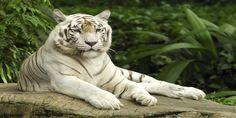 Hayvanlar alemi facebook kapak fotoğrafları kapak resimleri