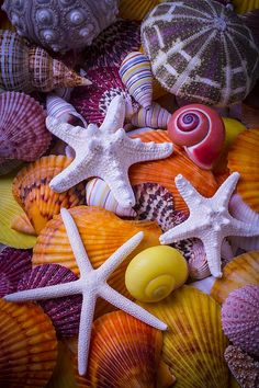 Three white starfish among colorful sea shells, a beautiful collection of marine life. Wallpaper Backgrounds, Iphone Wallpaper, City Wallpaper, Animal Wallpaper, Paradis Tropical, Shell Beach, Shell Art, Color Of Life, Ocean Life