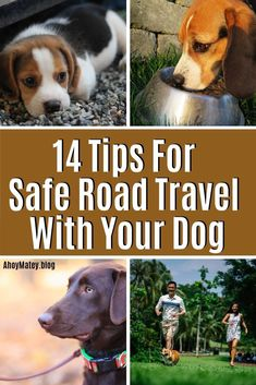 Planning a road trip with your dog? Follow these 14 tips for things you need to keep in mind when traveling with your dog by car. Travel With Pets Dogs | Travel With Dogs Road Trips | Travel With Pets Dogs Cars | Travel With Pets Dogs Road Trips Tips | Travel With Dogs Road Trips Cars #travel #roadtrip #dogs #pets Road Trip Packing, Packing Tips For Travel, Travel Checklist, Road Trip Hacks, Camping Hacks, Travel Hacks, Dog Travel Accessories, Dog Friendly Holidays, Road Trip With Dog