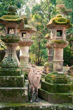 Ciervos en el templo - foto
