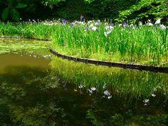 平安神宮:白虎池の花菖蒲