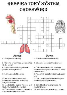 Biology Crossword Puzzle: The respiratory system (Includes answer key) Nursing Classes, Nursing Notes, Science Worksheets, Worksheets For Kids, Vowel Worksheets, Revision Games, Science Revision, Anatomy And Physiology Test, Building Games For Kids