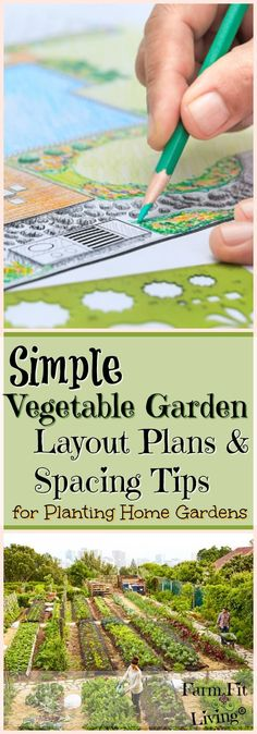 Are you looking for more simple vegetable garden layout plans and spacing tips to maximize efficiency in your home garden space? via @www.pinterest.com/farmfitliving #gardeningorganic