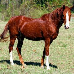 This is he most beautiful horse ever!!!