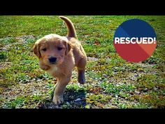 Hope For Paws: Fastest Rescue & Reunion of Lost Hungry Dog Ever - Amazing reunion due to a microchip - YouTube
